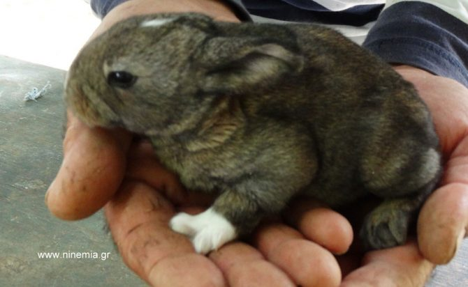 holding a baby rabbit-
