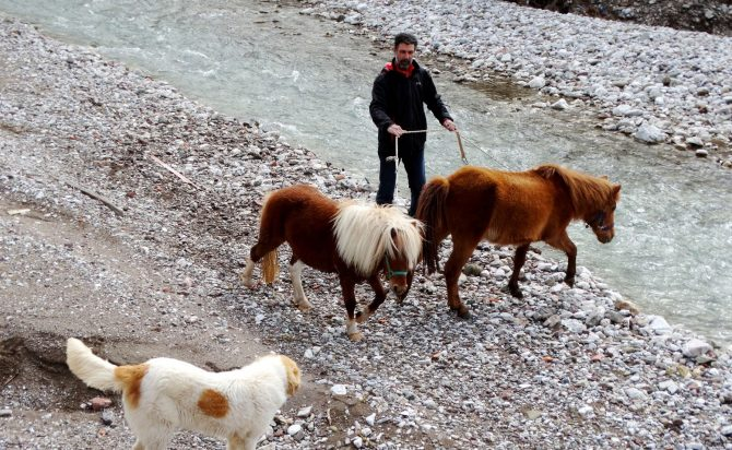 The dog & the horses in the river